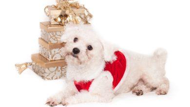 Какую собаку подарить на праздник