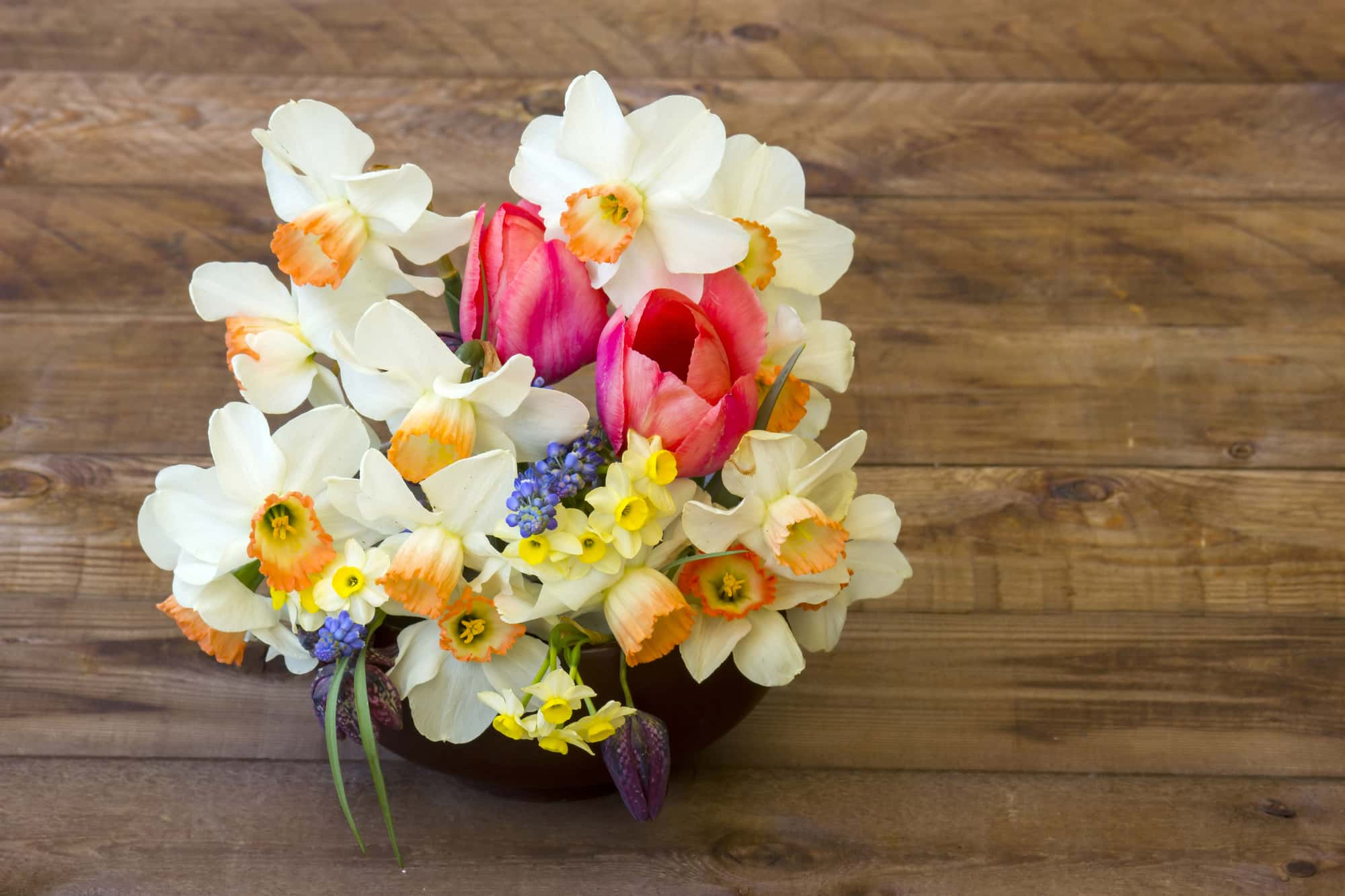 Какие цветы в горшке подарить девушке