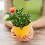 Какой цветок в горшке подарить женщине