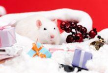 Новогодние поздравления на 2020 год: с годом Крысы