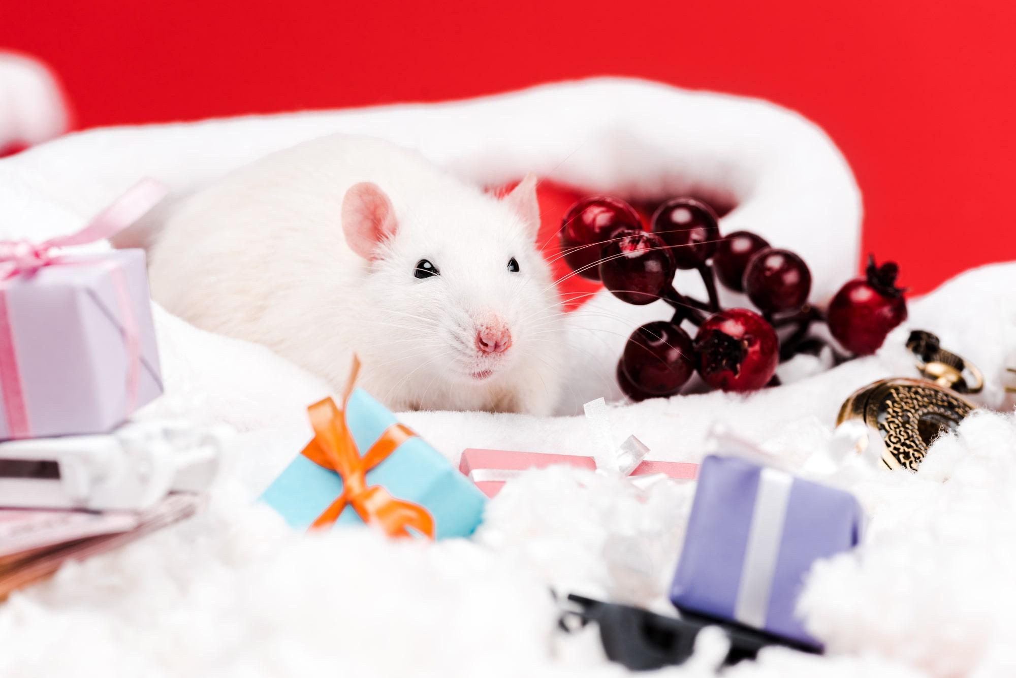 Поздравления в год белой металлической крысы