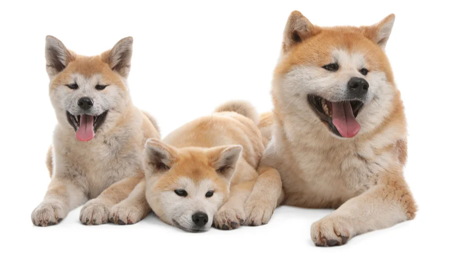 Каких собак дарили Владимиру Путину