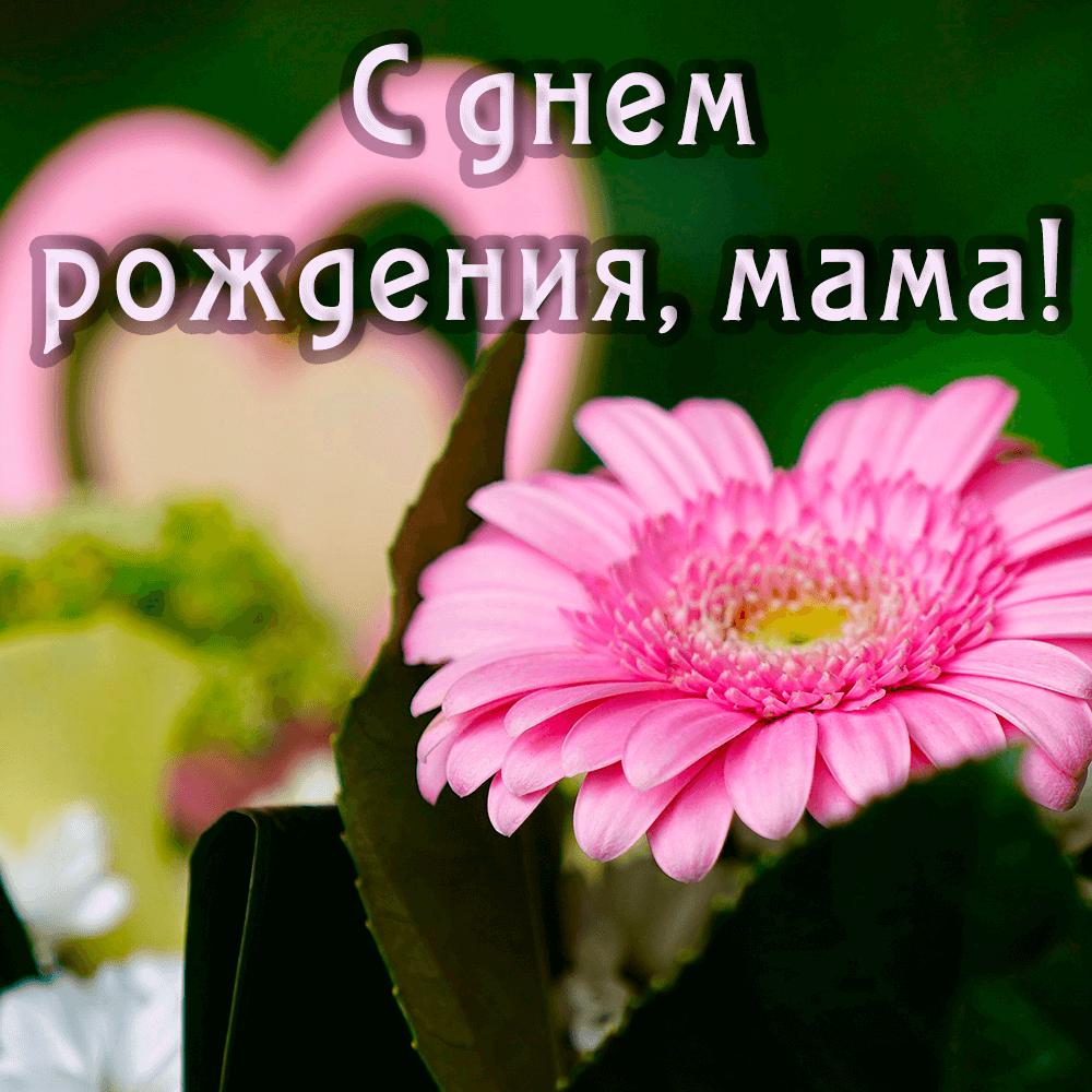 Очень красивая открытка маме с герберами