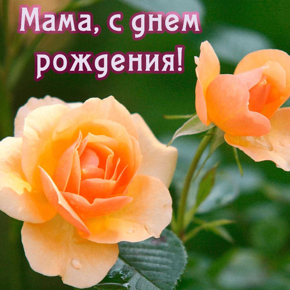 Чудесная поздравительная открытка маме