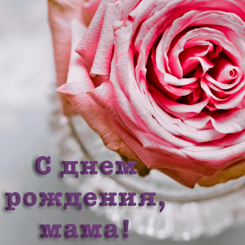 Открытка маме с огромным цветком