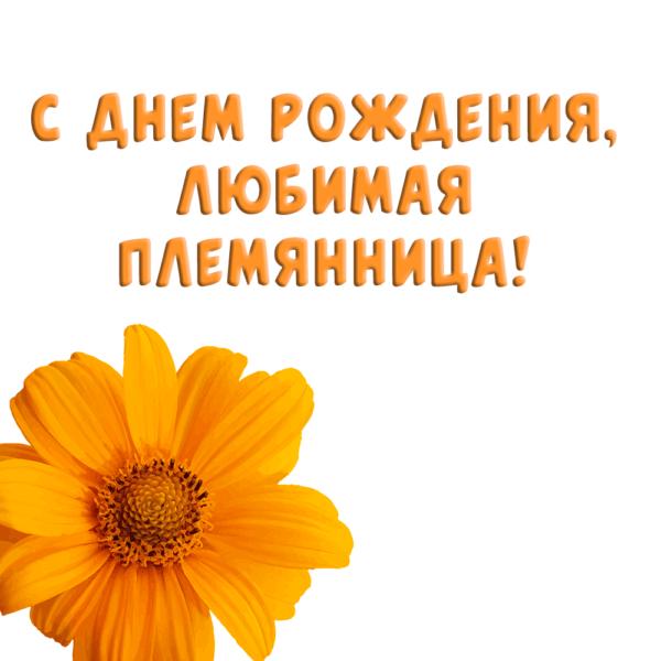 Позитивная открытка племяннице