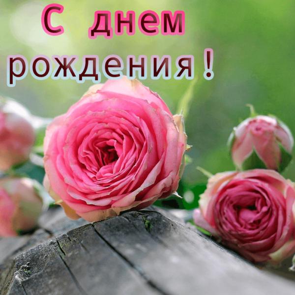 Красивая открытка племяннице с розой