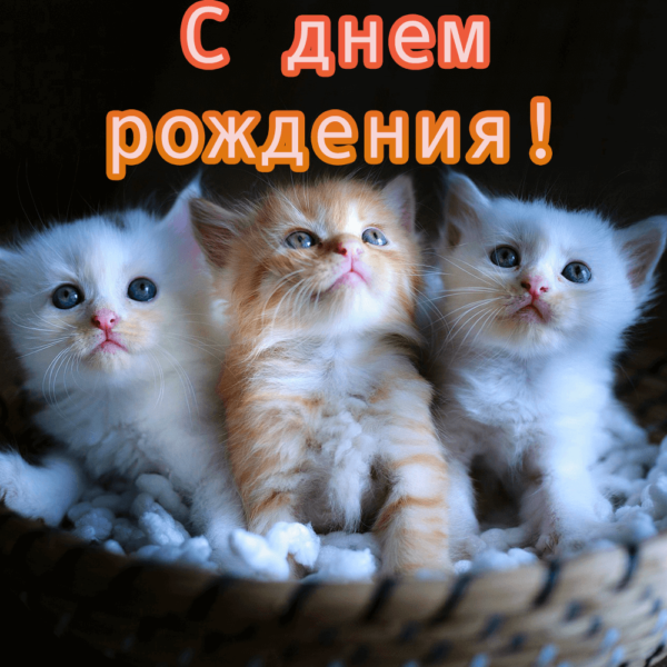 Оригинальная открытка с котиками племяннице