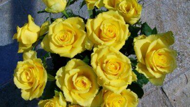 Можно ли дарить желтые розы