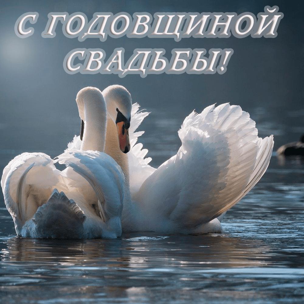Красивые нежные лебеди на открытке