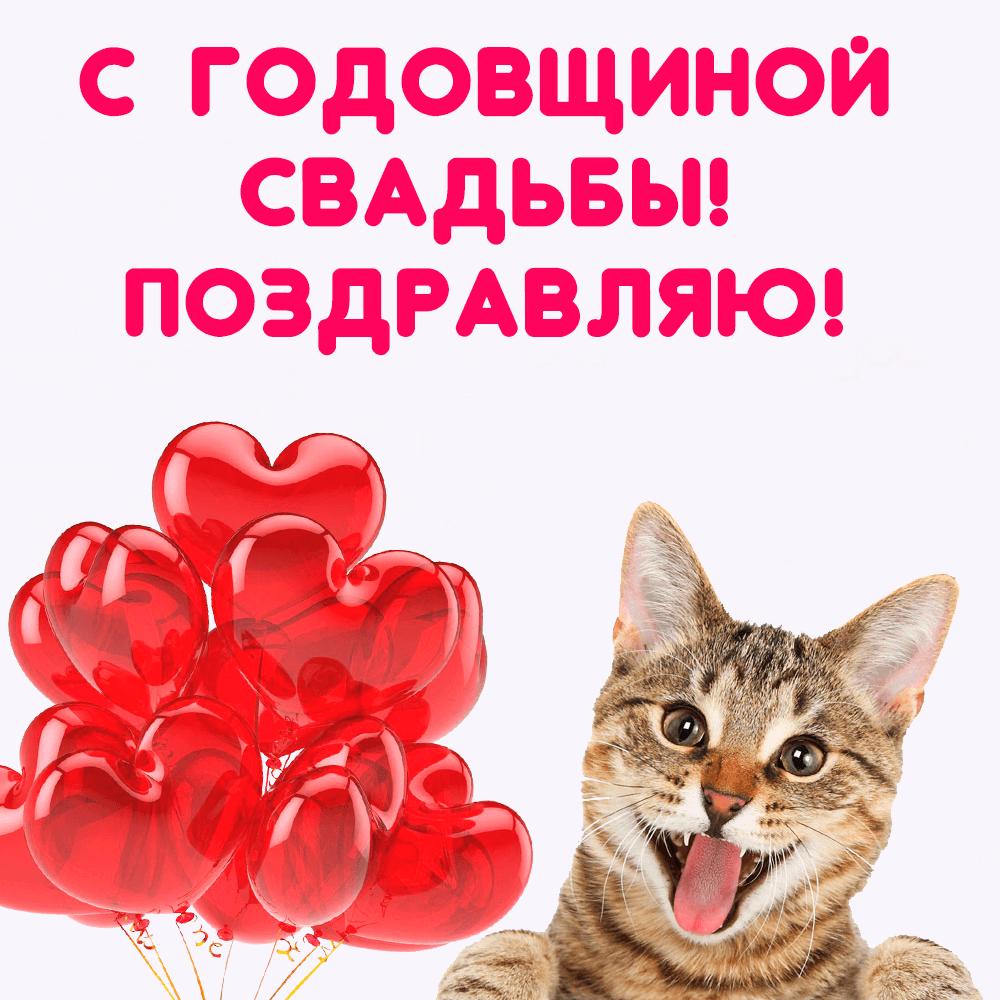 Открытка с котом и шариками на годовщину свадьбы