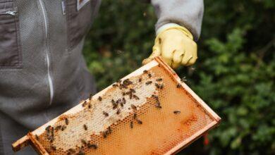 Что подарить пчеловоду