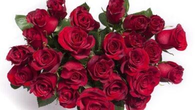 К чему снится, что дарят красные розы