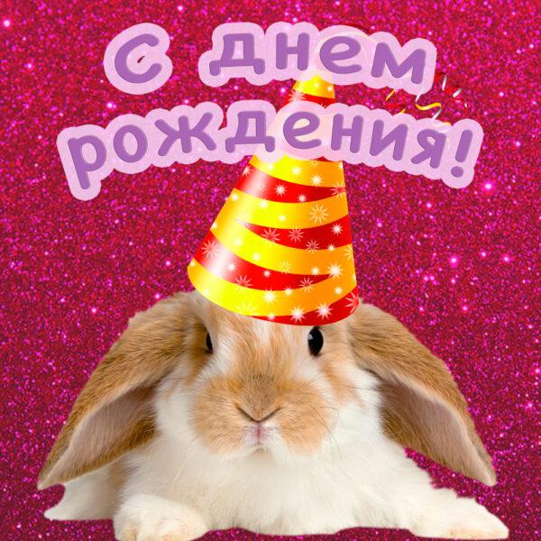 Красивый кролик на поздравительной открытке