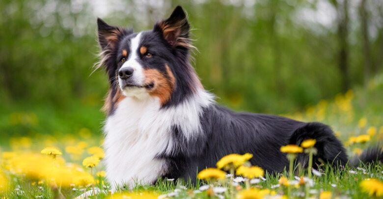 К чему снится, что дарят собаку