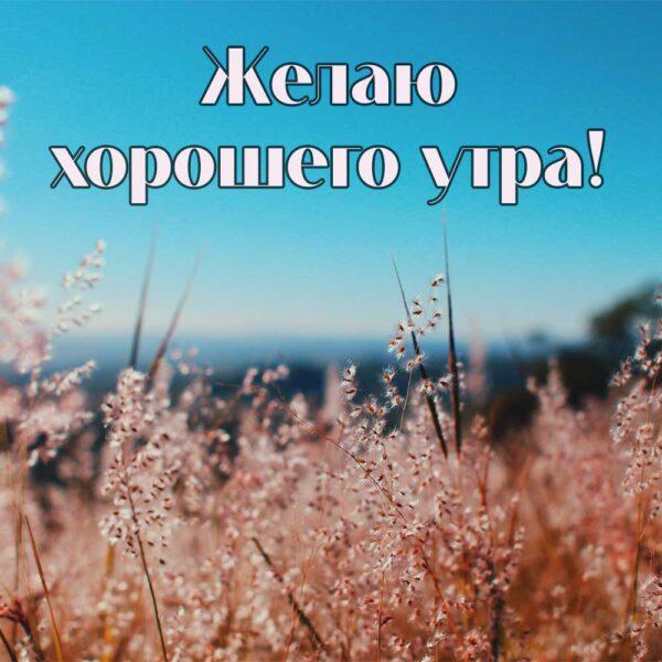 Желаю тебе прекрасного летнего утра