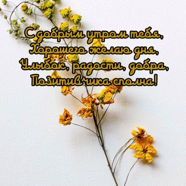 С добрым утром, желаю хорошего дня
