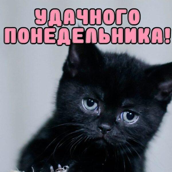 Черный котенок желает удачного понедельника