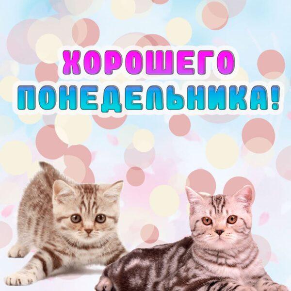 Милые котята на открытке в понедельник