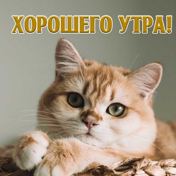 Прикольная открытка с котом