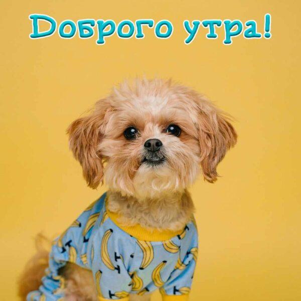 Веселая собачка на утренней открытке