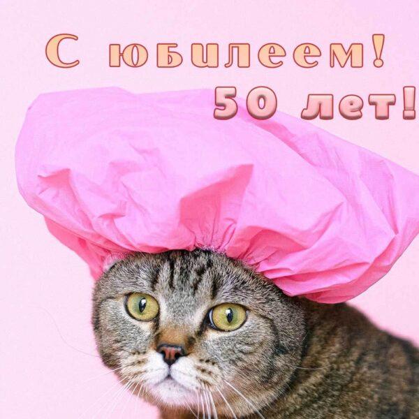 Смешной кот на открытке женщине