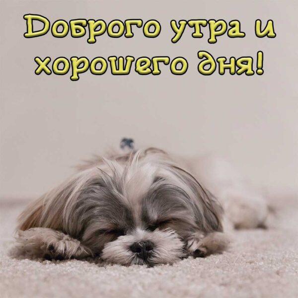 Пёсик желает хорошего пробуждения