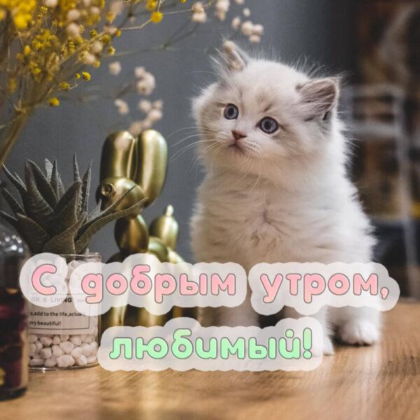 Открытка с пушистым милым котенком