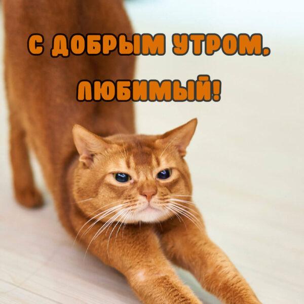 """Рыжий котик """"С добрым утром"""""""