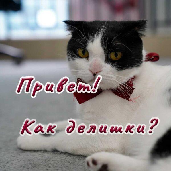 Открытка с котом женщине