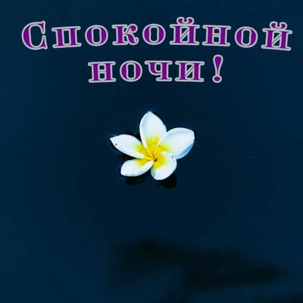 Темная открытка женщина с цветком