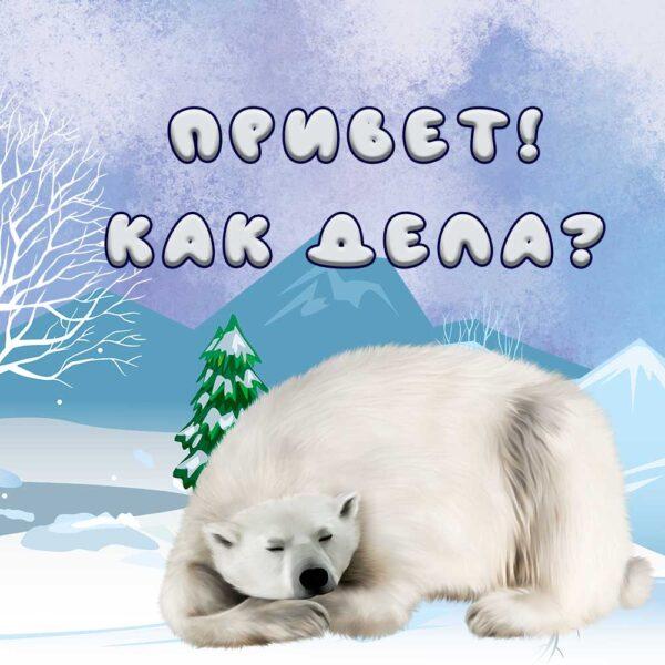 Белый мишка на открытке Привет, как дела?