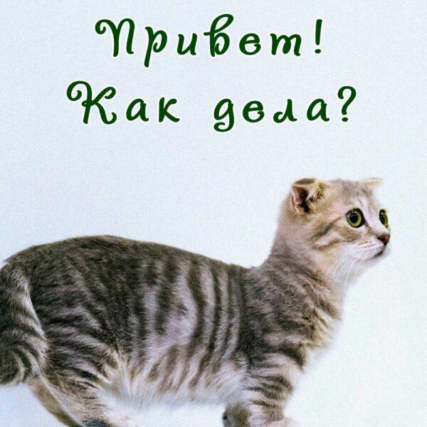 Источник: Прикольная открытка мужчине с котенком