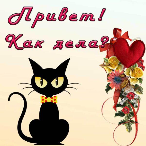 """Черный кот на открытке """"Приветик, как дела?"""""""