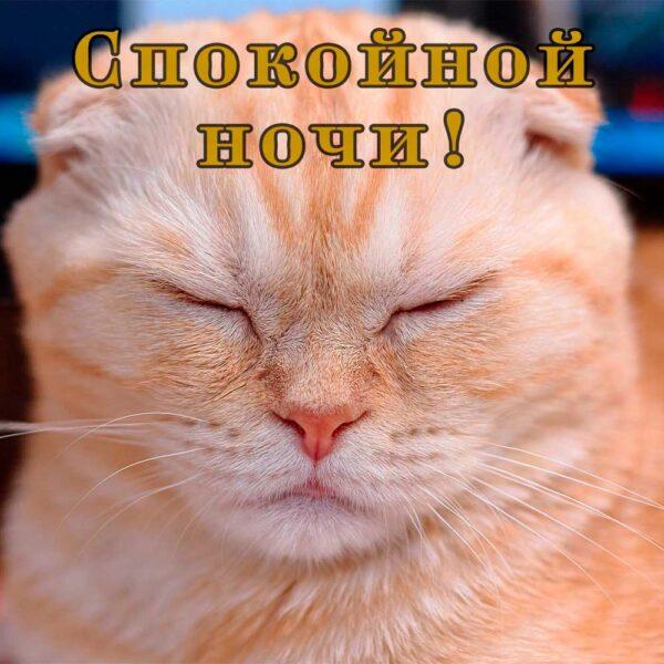 Открытка с прикольным рыжим котом