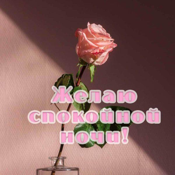 Открытка с розой на ночь