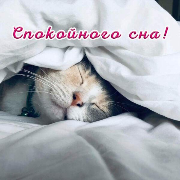 Открытка с котиком на ночь