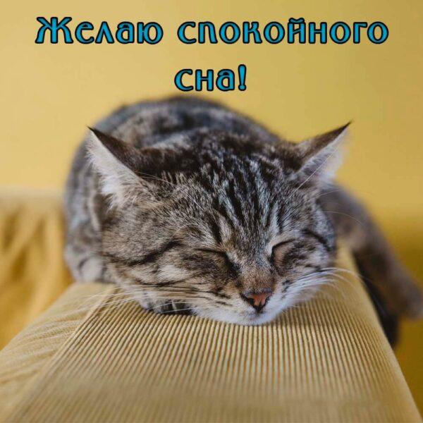 Желаю тебе спокойной ночи!