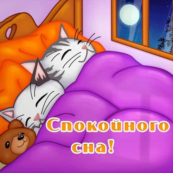 Открытка с милыми котятами