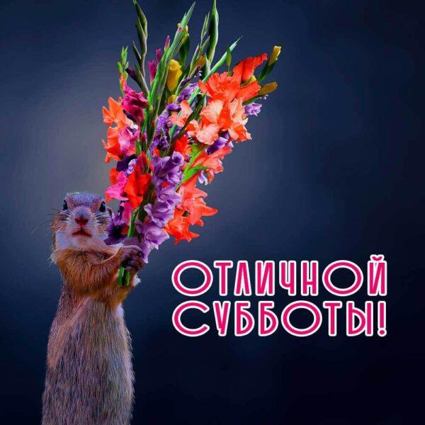 Веселая открытка-пожелание с сусликом
