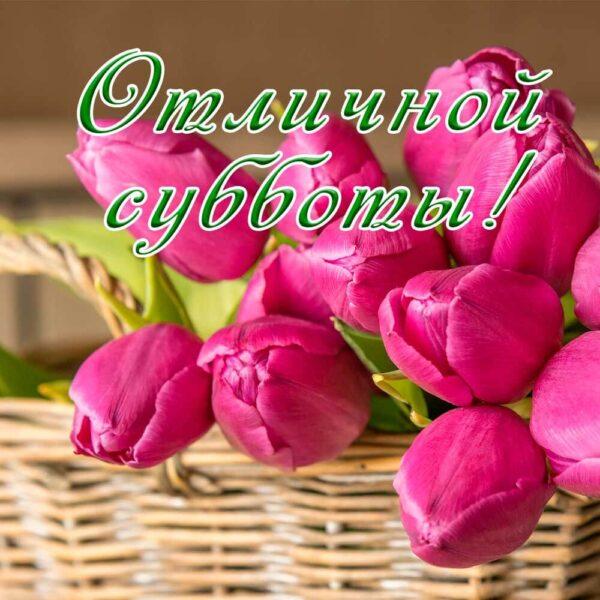 Яркие тюльпаны на открытке-пожелании