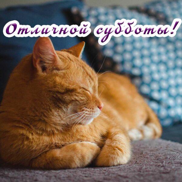 Рыжий кот на открытке с пожеланием