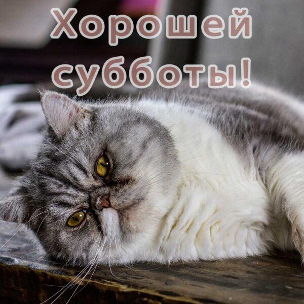 Забавная открытка с котом с субботой